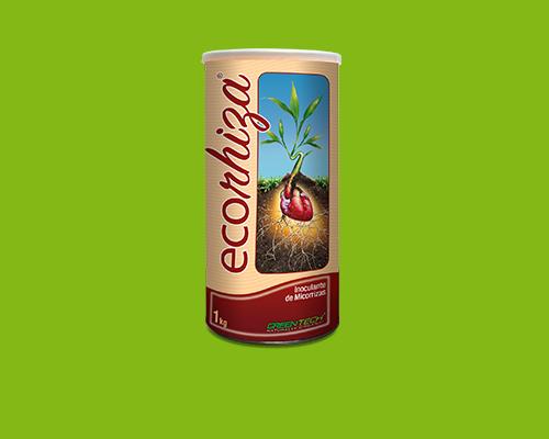 Ecorhiza